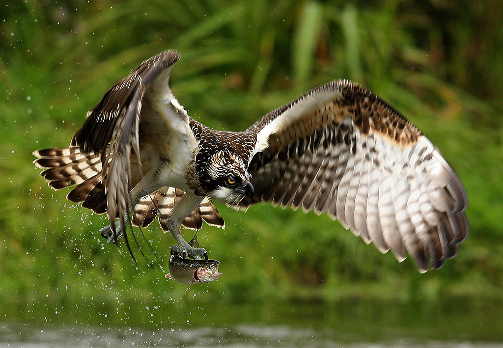 Pictures of Wild Birds of Prey.