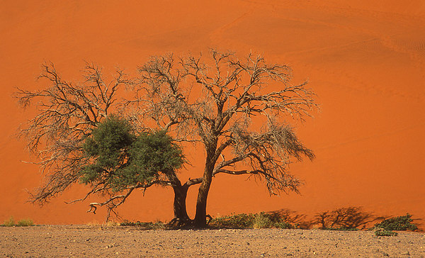 Pictures of Namibia and what I saw.